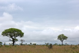 KrugerSAT19