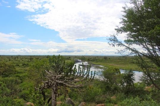 KrugerSAT31