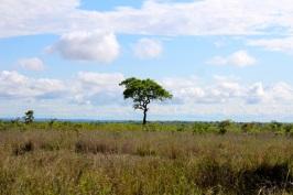 KrugerSAT33