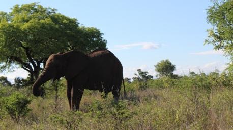 KrugerSAT42