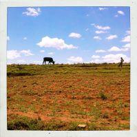 Lesotho15