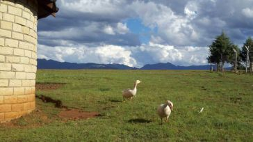 Lesotho37