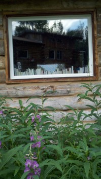 Writer's cabin surrounded by fireweed.